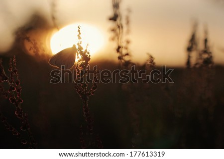 Sunset with butterfly silhouette over meadow - stock photo