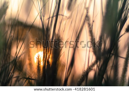 Sunset with grass flowers