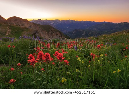 Sunset with indian paintbrush wildflowers in the Wasatch Mountains, Utah, USA. - stock photo