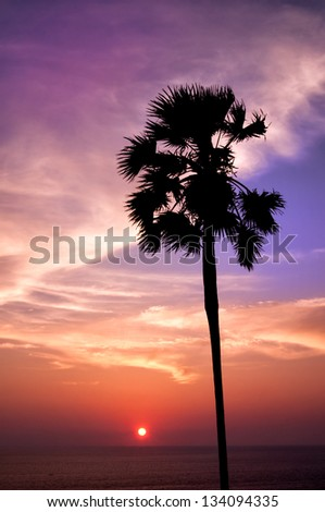 Sunset with palm. Ko Pukhet island, Thailand