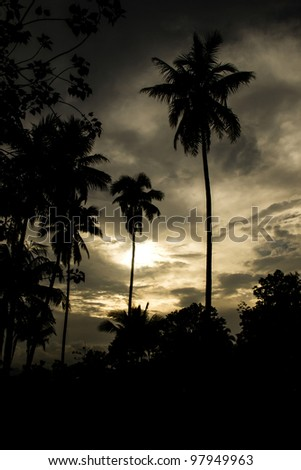 Sunset with palm trees shadows - stock photo
