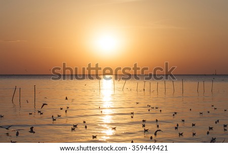 Sunset with reflection on the sea and front of crowd of the bird , Bang Pu - Thailand