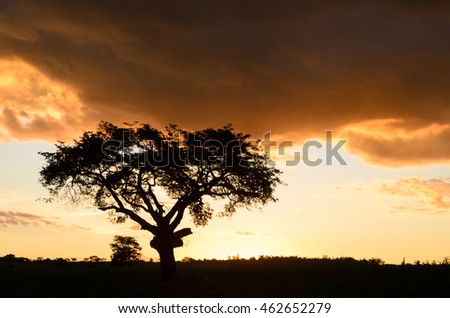 sunset with silhoueted tree and dust, Brazil