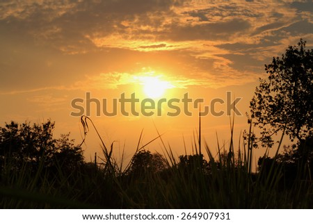 Sunset with silhouette leaves foreground - stock photo