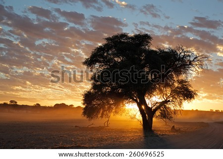 Sunset with silhouetted tree and dust, Kalahari desert, South Africa - stock photo