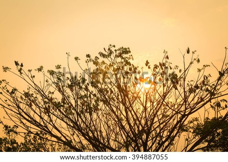 sunset with the shadow of tree branch - stock photo