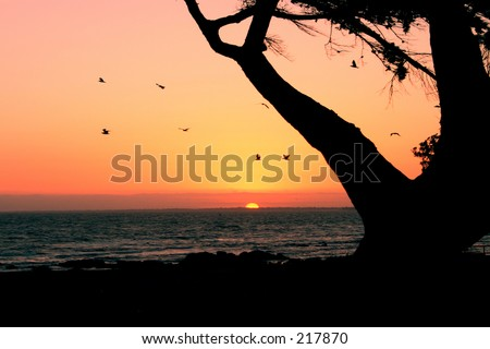 sunset with tree and birds