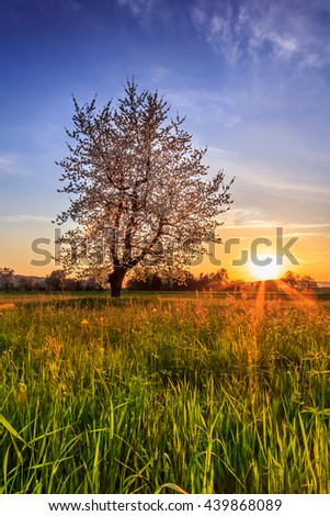 Sunset With Tree On Field Meadow With Sun Rays And Blue Sunny Sky