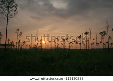 sunset with trees - stock photo