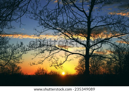 Sunset with trees, silhouette