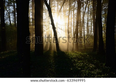 Sunshine and sunshine through the mist behind the trees in the forest
