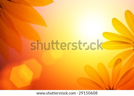 Sunshine background with sunflower details. - stock photo