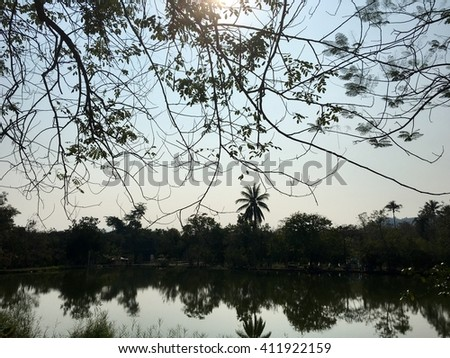 Sunshine behind tree branches near the lake. - stock photo