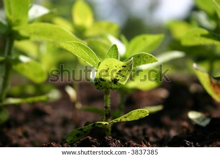 Sunshine on a small seedling growing in the garden - stock photo
