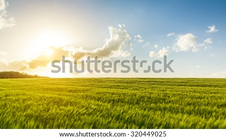 Sunshine over a cornfield in germany - stock photo