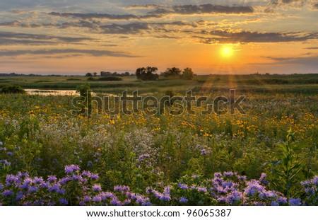 Sunshine over the flower field Sunshine over a wild flower field in Illinois. - stock photo