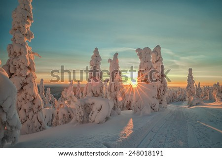 Sunshine trough the snow covered trees at lapland Finland - stock photo