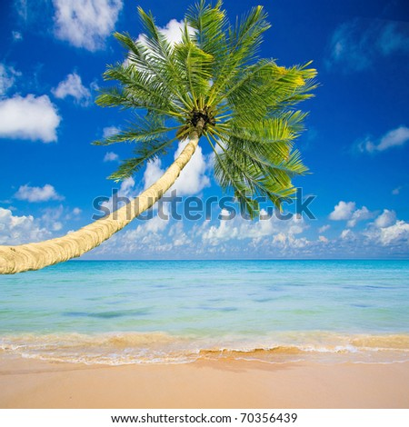 Sunshine Wallpaper Palm - stock photo