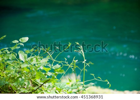 Sunspots on  water stream in woods.  Fontaine de Vaucluse (Provence, France). Selective focus on the plants. Eco planet concept. - stock photo