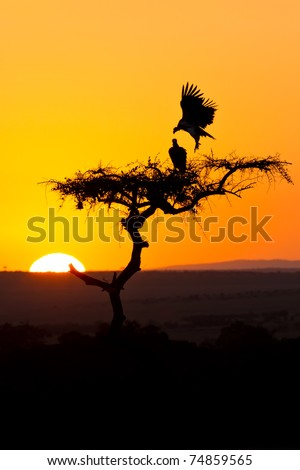 Sunsrise in africa behind a tree with flying birds - stock photo