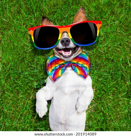 super funny face gay dog lying on back on green grass and laughing out loud - stock photo