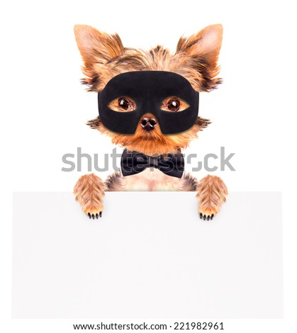 super hero puppy dog wearing a black mask and holding white paper banner