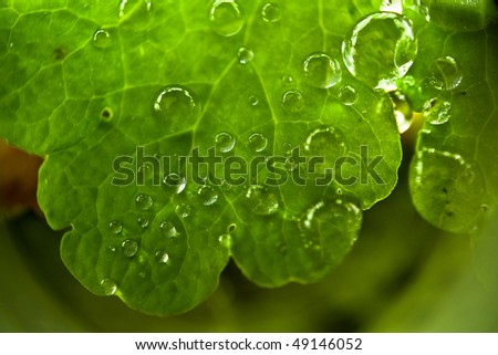 super-macro of water drops on the leaf