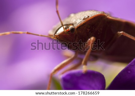 Super macro photo of bedbug on flower - stock photo