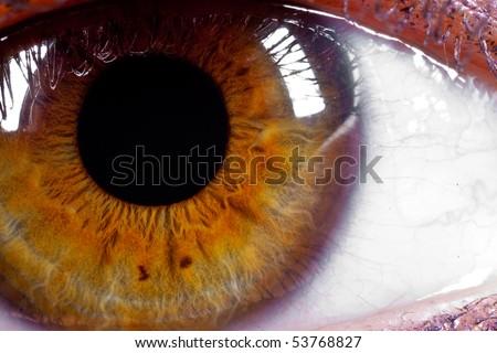 super macro shot of hazel eye - stock photo