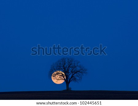 Super moon and lone tree - stock photo