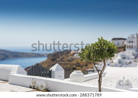 Superb view in Santorini, Greece with a small tree. - stock photo