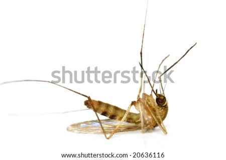 Supermacro of Dead Mosquito - stock photo