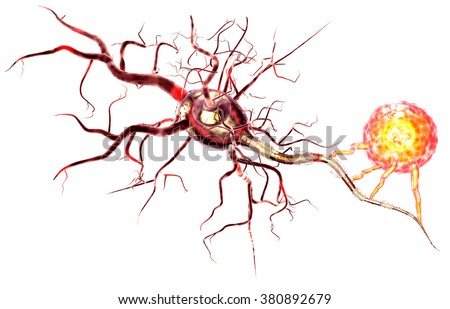 Supportive tissue of the nervous system. Neuron structure. Neuron, astrocyte (glial cell), oligodendrocytes, axon. Isolated on white background - stock photo