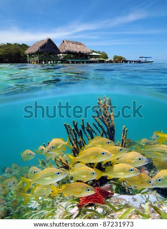 Surface and underwater view in the Caribbean sea with a tropical restaurant over the water and seabed with a shoal of fish, Cayo coral, Bocas del Toro, Panama - stock photo