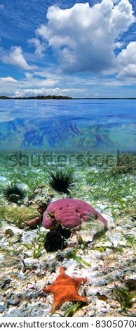 Surface and underwater view with cloudy sky, coral, starfish and urchins, Caribbean sea, Panama - stock photo