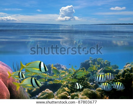 Surface and underwater view with school of tropical fish in coral reef and blue sky with cloud, Caribbean sea - stock photo