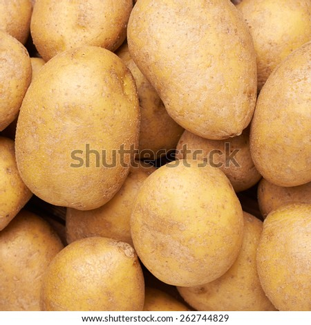 Surface covered with multiple fresh yellow washed potatoes as a background composition - stock photo