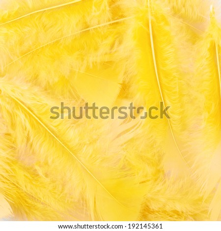 Surface covered with yellow feathers as a background texture composition - stock photo