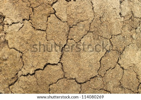 Cracked earth stock photo 240606892 shutterstock surface drying and cracking of the anthill sciox Images