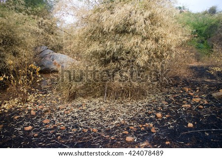 Surface fire: fire in the Bush. Scorched dry plains with shrubs, plants wither and lose their leaves (beautiful pattern of fallen leaves on a background of ashes) - stock photo