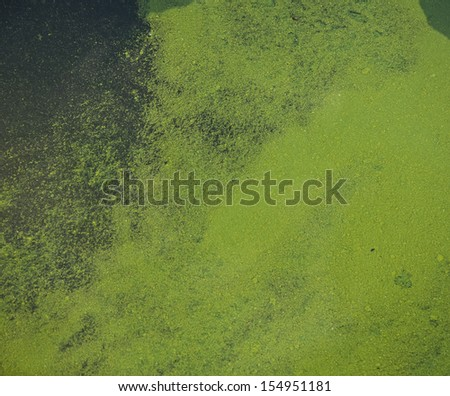 surface of a pond covered in duckweed suitable for textured background - stock photo