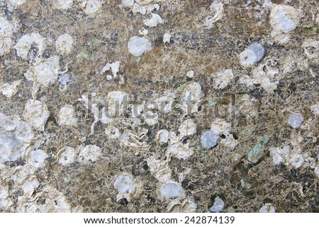 Surface of an old  boat - stock photo