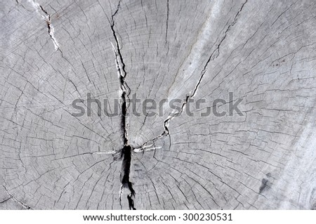 Surface of old wood cut texture - stock photo