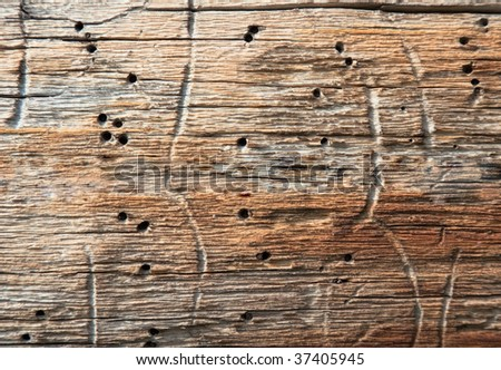 Surface of rotten wood with holes the made larvae of bugs