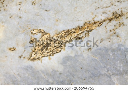 Surface texture of rocks, closeup of photo