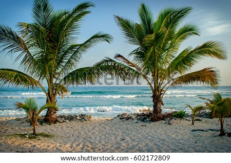 Surfer's beach palm trees