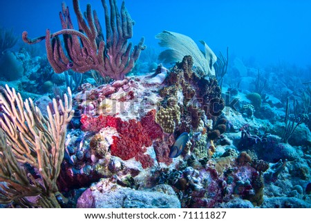 Surgeon fish with soft corals. - stock photo