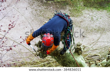 Surgeon man in red helmet cutting sycamore tree - stock photo