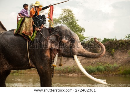 SURIN,THAILAND-MAY 23 :  Elephant happiness drinking water and relaxing after Ordination Parade on Elephants Back Festival at Moon river on May 23,2013 in Surin Province, Northeast of Thailand. - stock photo