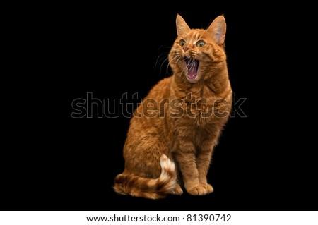 Surprised Cat - stock photo